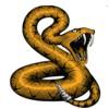 Snake Pro – Vipera berus